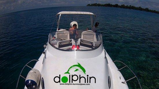 Dolphin Karimunjawa