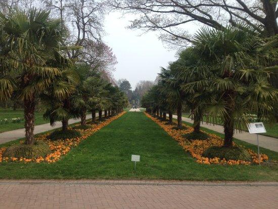Botanical Gardens Flora : Real palm trees