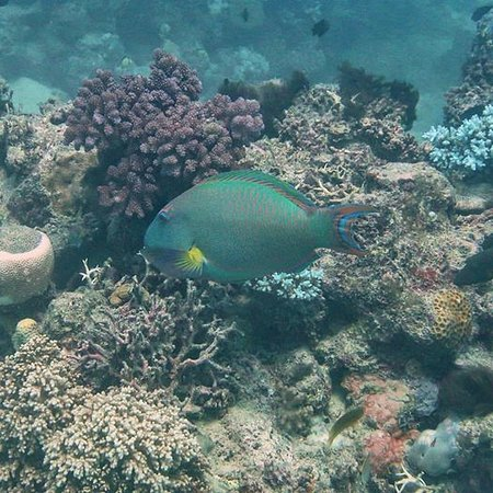 Parrotfish picture of pro dive cairns day trips cairns - Pro dive cairns ...