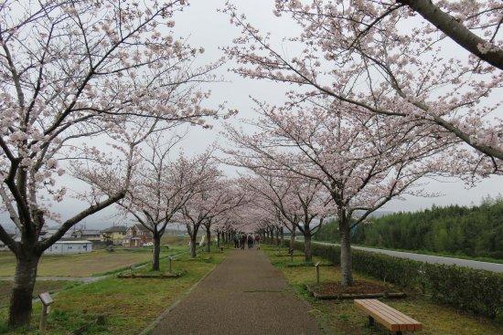 Ono Cherry Blossom Corridor