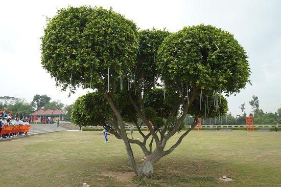 Juguanglou : 晚上發光樹