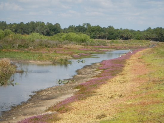Harn's Marsh