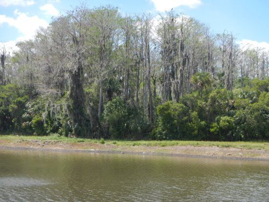 Lehigh Acres, Флорида: Cypress trees