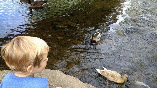 Saint Matthews, KY: Feeding the ducks