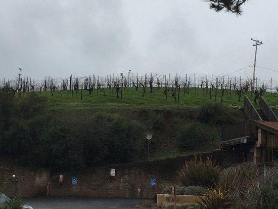 Ridge Vineyards Photo