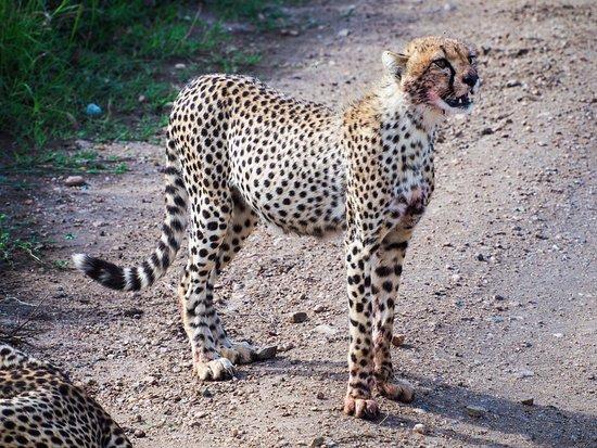 Región de Arusha, Tanzania: wild animals at Serengeti