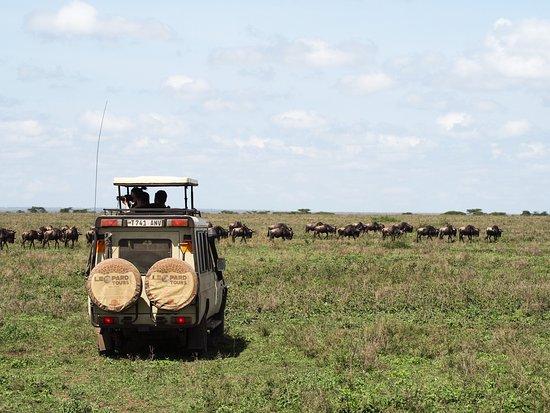 Región de Arusha, Tanzania: animal immigration