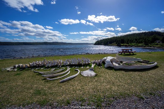 Glovertown, Canada: Whale bones