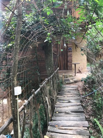A secret tunnel leading into my treehouse where I ate the most delicious breakfasts while watchi