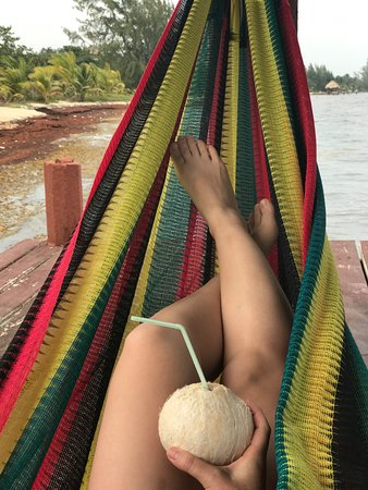 Green Parrot Beach Houses: Hammock on the dock, fresh coconut from the bar.