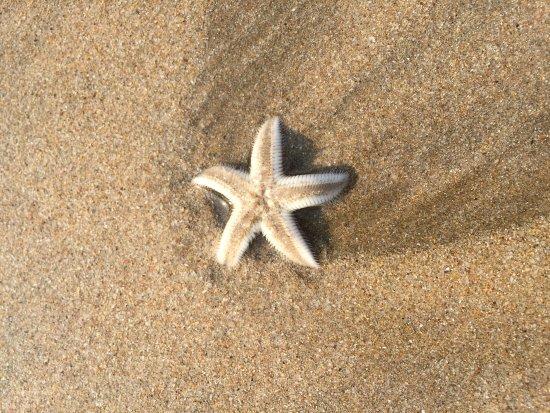 Ganapatipule Beach Photo