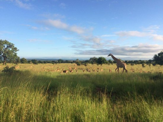 Região de Dar Es Salaam, Tanzânia: På turen så vi giraffer, elefanter, løver, zebraer, impalaer, flodheste, krokodiller, en pyton o