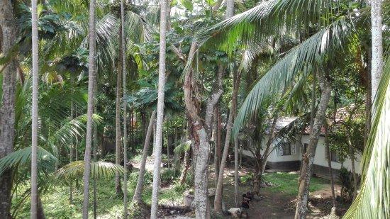 Dodanduwa, Sri Lanka: Výhled z terasy
