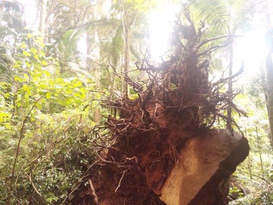 Mont Tamborine, Australie : policromia
