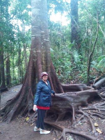 Tamborine Mountain, Australia: naturaleza exhuberante