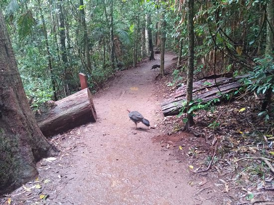 Tamborine Mountain, Australia: total tranquilidad, saben que se las respeta