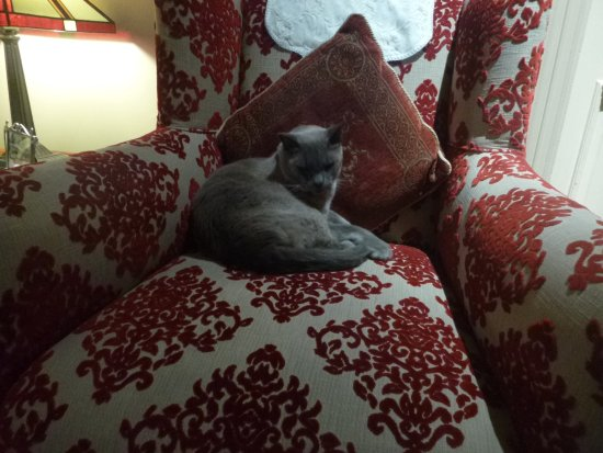 Lurline House: Moet - the cat