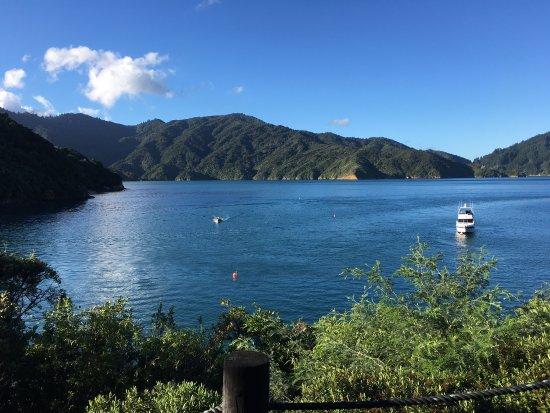 Arthurs Bay, Neuseeland: photo4.jpg