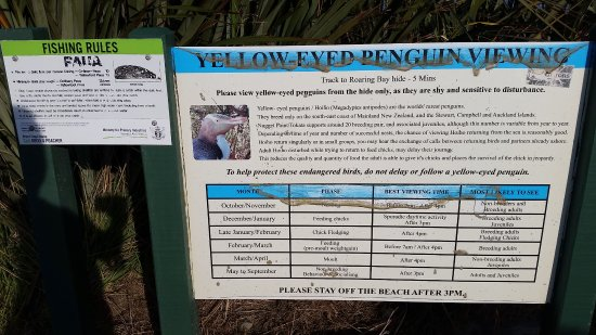 Kaka Point, New Zealand: Penguin viewing times