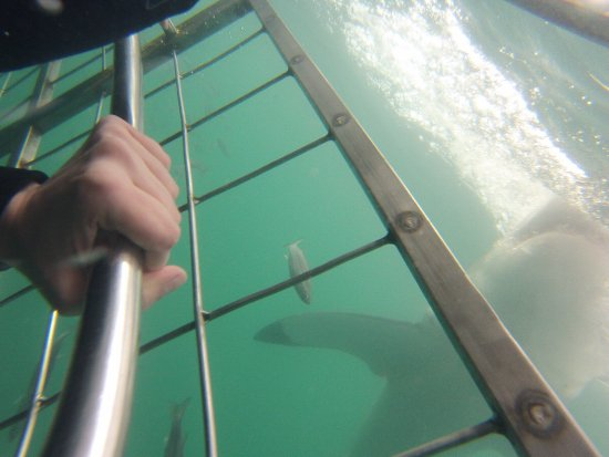Kleinbaai, South Africa: GoPro image inside the cage