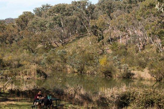 Queanbeyan, Αυστραλία: picnic area