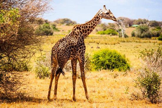 Garibaldi Safari Kenya