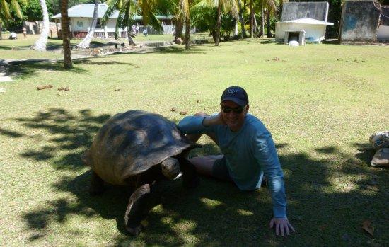 Praslin Island, Seychelles: Tartarughe in libertà