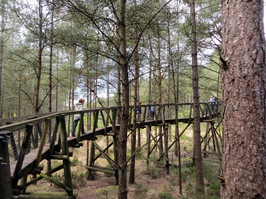 Ringwood, UK: Tree-top trail