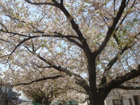 Honhaneda Park