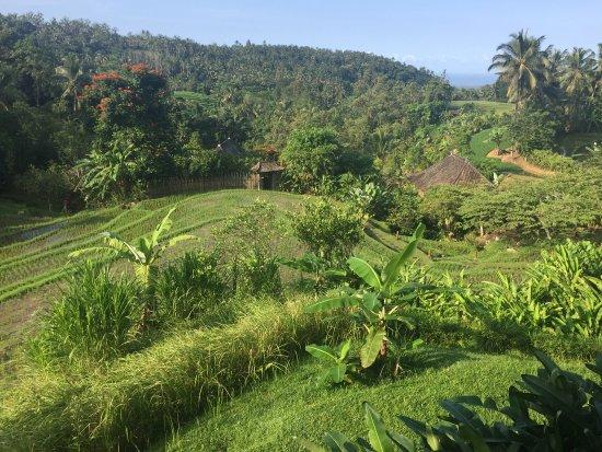 Bali Eco Stay Bungalows: photo4.jpg