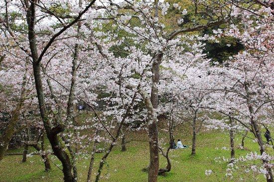 Nishi Park