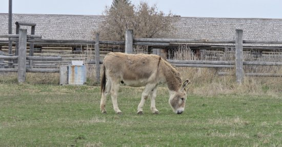 Fort Steele, Canadá: Lots of animals for the kids, or the kid in all of us