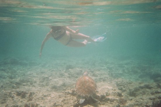 Christ Church, Barbados: Aussie girl with turtle
