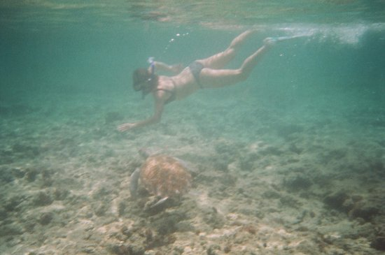 Christ Church, Barbados: Turtle on reef
