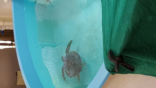 Georgia Sea Turtle Center: 20160419_125005_large.jpg