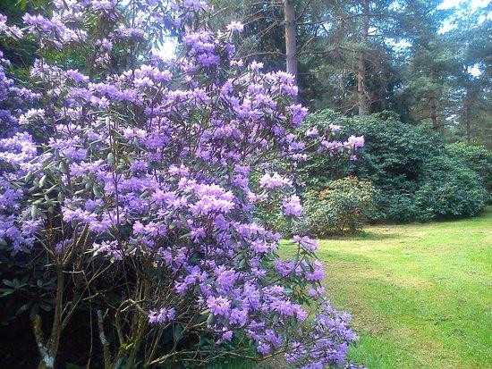 Rhododendronpark Jansen