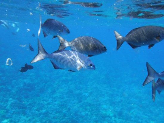 Maalaea, HI: Snorkeling at Molokini