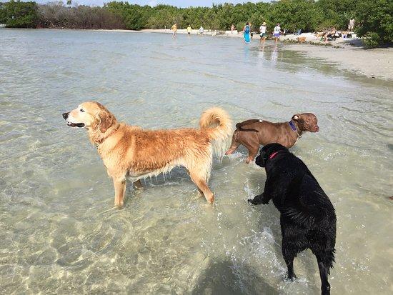 Dog Beach照片