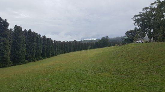 Olinda, Australia: Rj Hamer Forest Arboretum