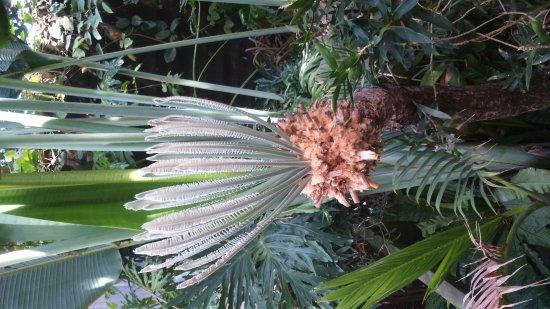 Terra Botanica : DSC_0550_large.jpg