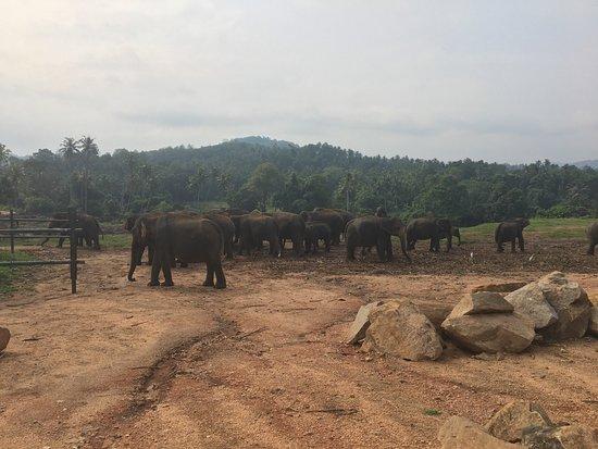 Пиннавала, Шри-Ланка: photo2.jpg