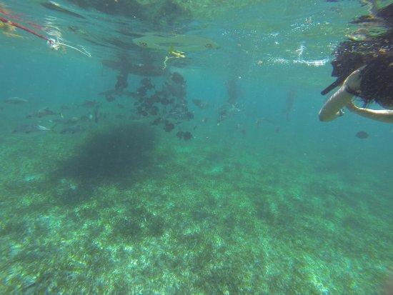 Ambergris Caye, Belize: Debajo del mar