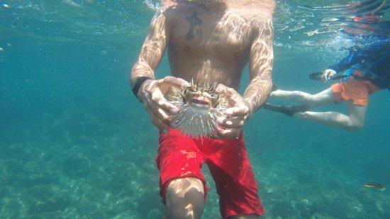Herradura, Κόστα Ρίκα: Puffer fish