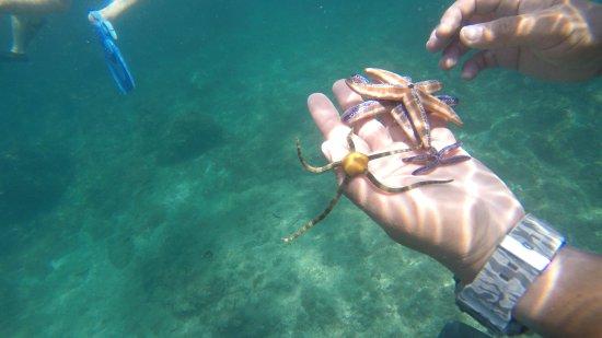 Herradura, Kosta Rika: Star fish