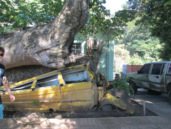 Nature Isle Explorer Day Tours: Tree fell on a bus during a storm years ago