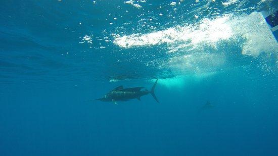 Los Suenos, Costa Rica: Notice two sails in picture