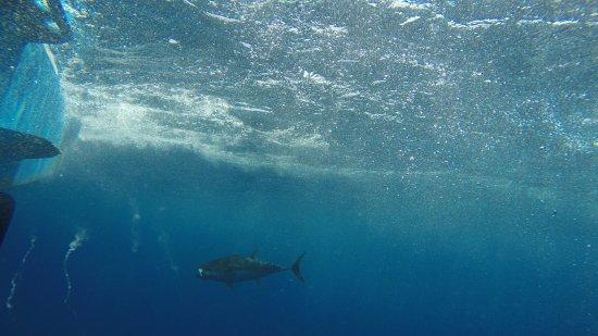 Los Suenos, Costa Rica: Tuna