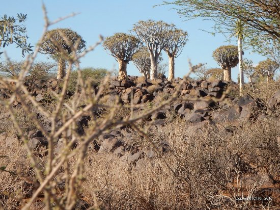 Keetmanshoop, Namibia: Quivertree Forest