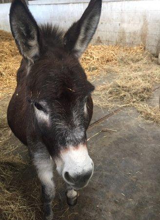 The Isle of Wight Donkey Sanctuary : photo1.jpg