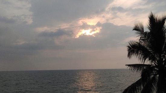 Снимок Palm Tree Heritage